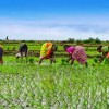 The role of an Agricultural Knowledge for Agriculture Innovation