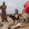 Somaliland's lack of pre- drought proactive measures will cause another acute livelihood crisis